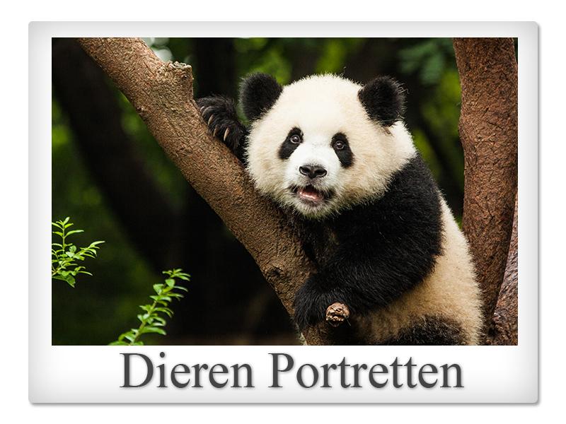 Polaroid dieren portretten