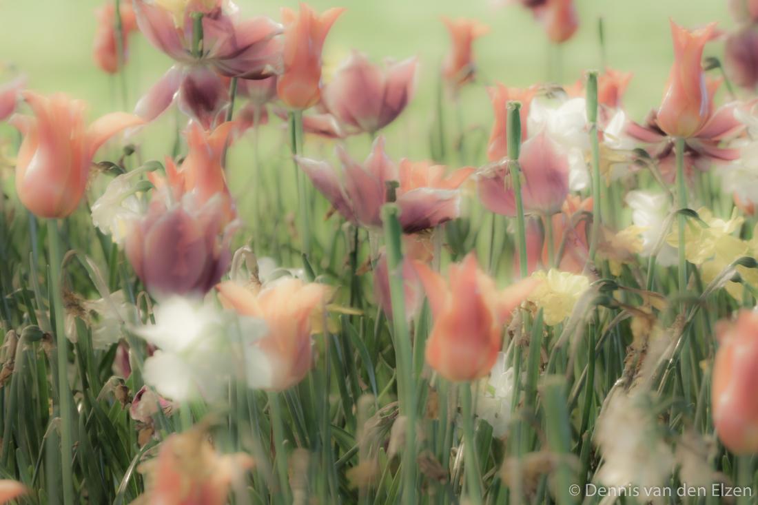 bloemen-8