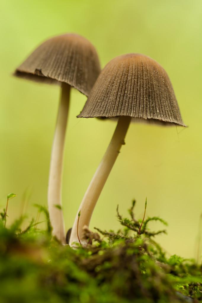 paddenstoelen-14